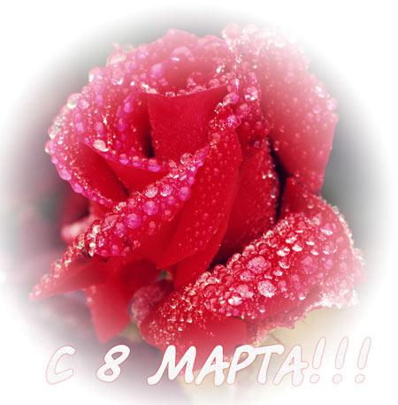 http://www.spb-bus.ru/images//1267529113_mart56.jpg